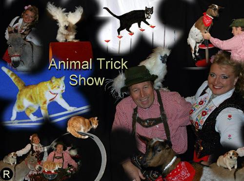 Kleindierencircus Circus met Kleine dieren